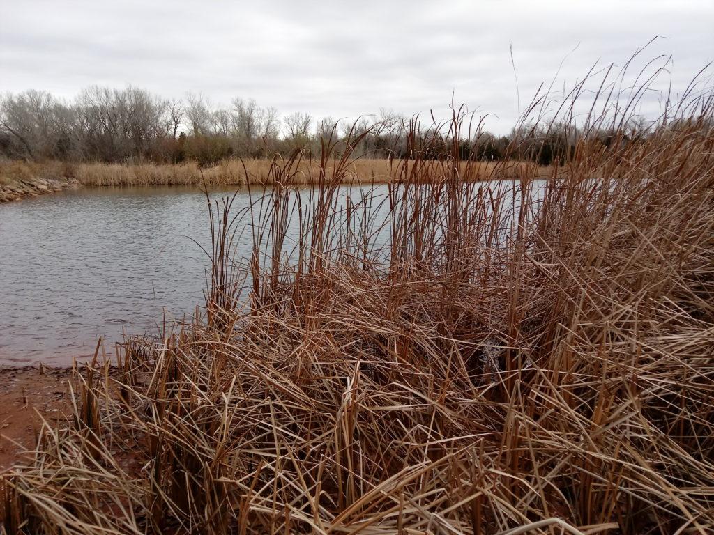 LG Stylo 2 V at the lake