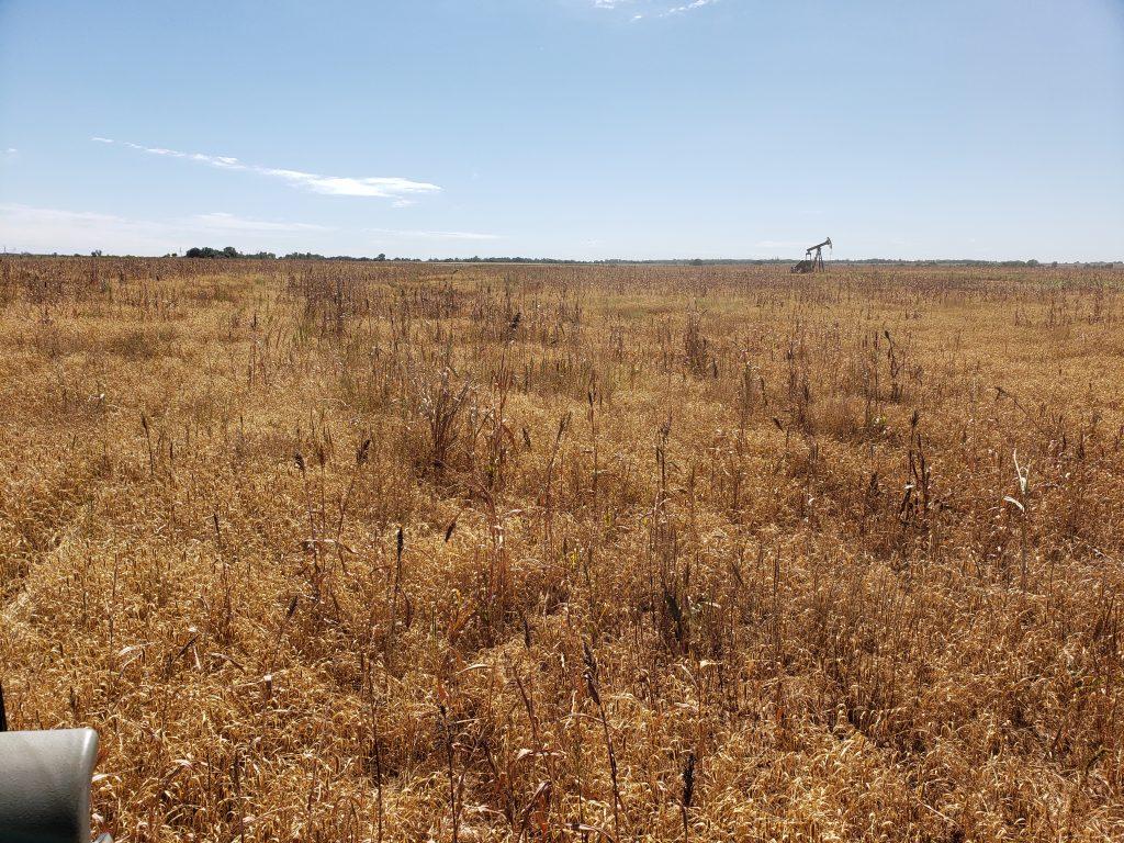 Cover crop dead
