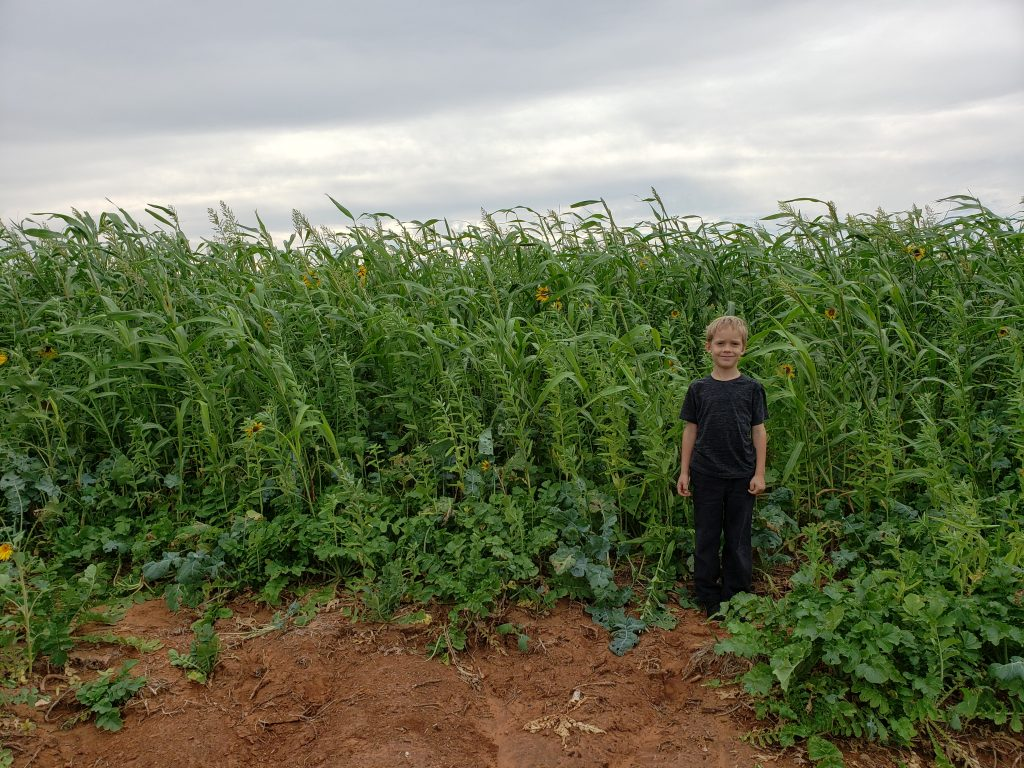 Nolan in front of cover crop
